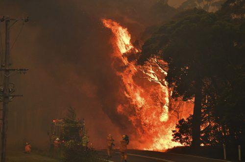 Seit Wochen kämpfen die Einsatzkräfte gegen rund hundert Buschbrände. AP