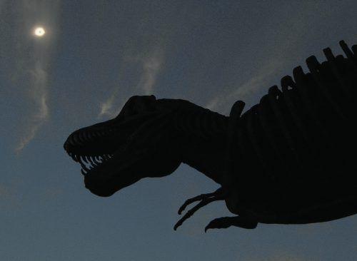 Der Tyrannosaurus Rex konnte bis zu 13 Meter lang werden. APA