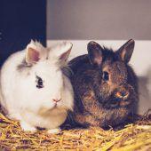 Kaninchen wollen zusammenbleiben