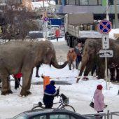 Elefanten aus Zirkus entwischt