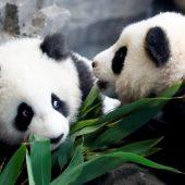 Berliner Zoo stellte Pit und Paule den Besuchern vor
