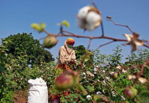 Ein Drittel aller Textilfasern besteht aus Baumwolle. Reuters
