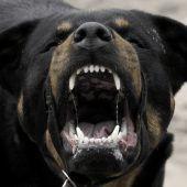 Hundeangriff an der Musikschule