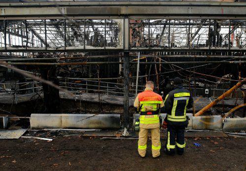 Ein Feuer hat in der Silvesternacht das Affenhaus im Krefelder Zoo zerstört. Reuters