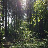 Kranke Bäume werden entfernt