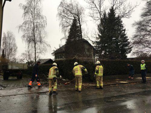 In Wolfurt musste die Feuerwehr einen umgeknickten Baum, der die Dornbirner Straße verlegt hatte, entfernen. vol.at/mayer