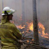 Feuerwehr brachte größten Buschbrand unter Kontrolle