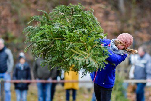 Nur weg damit: Nach den Feiertagen landen viele Christbäume auf der Straße.