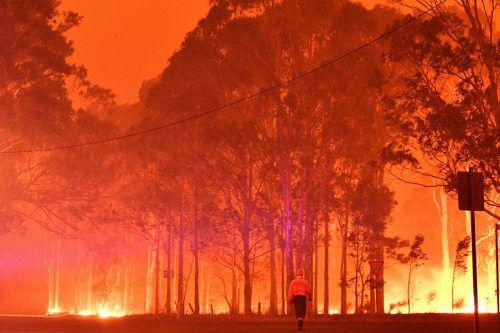 Seit Wochen kämpfen die Einsatzkräfte gegen die verheerenden Buschbrände. Die Flammen treiben Tausende Menschen in die Flucht. AFP