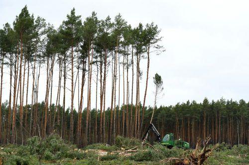 Am Freitagvormittag wurden die Rodungen in dem Waldstück fortgesetzt.reuters