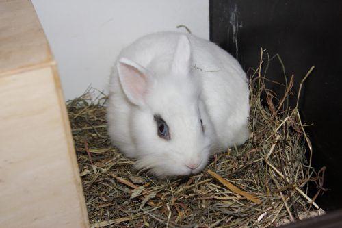 Das Kaninchen Lubchina, Kater Oskar sowie Sandy (l.u.) und Mandy suchen ein neues Zuhause. TSH