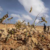 Milliarden Heuschrecken fallen über Ostafrika her