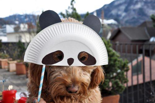 Die Maske eignet sich sogar für den Familienhund.