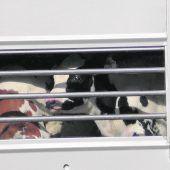 Gegen Tiertransporte