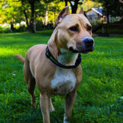 Hundefreunde aufgepasst: Kira (oben) und Figo suchen ein Zuhause. T SH