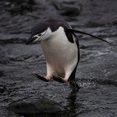 So warm wie nie zuvor in der Antarktis