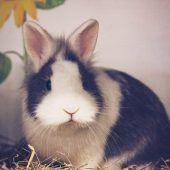 Kleines Kaninchen sucht Partner