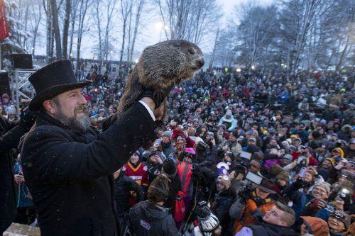Murmeltier Phil hat ein baldiges Winter-ende in den USA prophezeit. AP