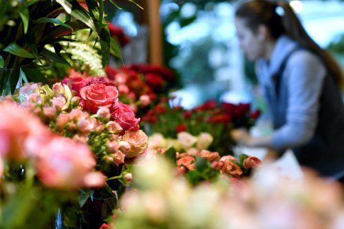Zarte Beeren-, Rosa- und Ockertöne, auch Topfpflanzen sind zum Valentinstag wieder beliebt. APA