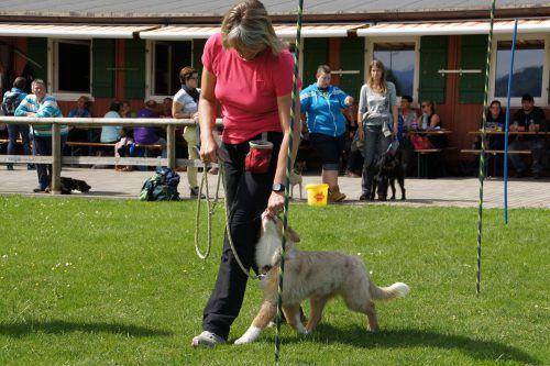 Der HSV gibt wertvolle Tipps im Umgang mit dem Hund.