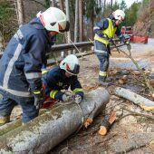 Baum stürzte auf Jagdbergstraße