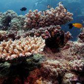 Great Barrier Reef: Heißer Sommer verschlimmert Korallenbleiche