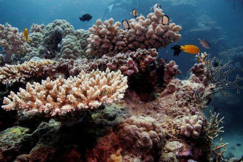 Die Unesco hat das 2300 Kilometer lange Korallenriff 1981 zum Weltnaturerbe erklärt. rts