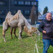 """<p class=""""caption"""">Direktor Adolf Lauenberger sucht eine Wiese für seinen Zirkus.</p>"""