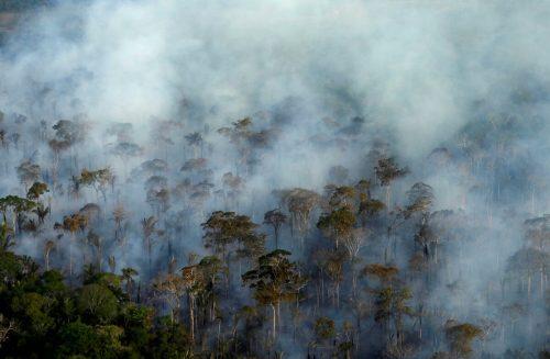 Experten zufolge werden die meisten Brände gelegt. Reuters