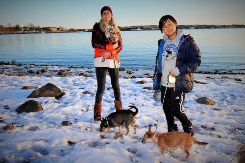 Heliane Rinke und Sohn Suji führen ihre drei Hunde Gassi.