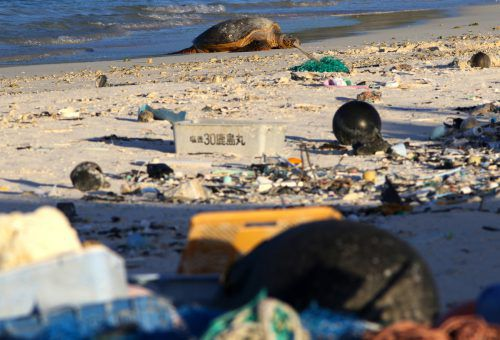 Immer wieder fressen Schildkröten Plastik und sterben daran. Bisher glaubten Forscher, die Tiere würden es vom Aussehen her mit Nahrung verwechseln. AP
