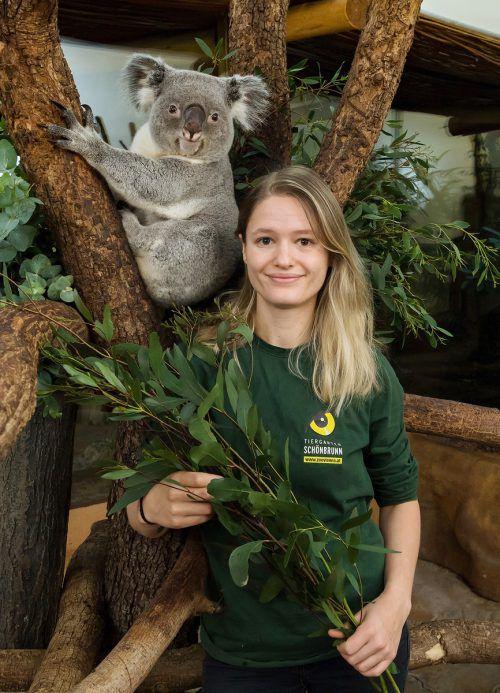 Tierpflegerin Kiva Cheyenne Prinsloo unterstützt Down Under. APA/tiergarten Schönbrunn