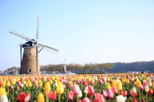 Das Festival vom 1. bis 26. April zieht normalerweise rund 100.000 Menschen an. AP