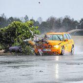 Crashtest zeigt: Bei Wildunfällen in der Spur bleiben