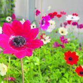 Pflanzen und Kräuter bis vor die Haustür