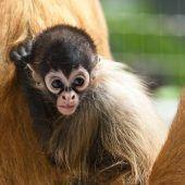Kletterartist im Zoo Basel on tour