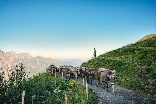 Die Vorarlberger Landwirte und Lebensmittelproduzenten sorgen für Grundversorgung und Wertschöpfung. Konsumenten können das unterstützen. Fa