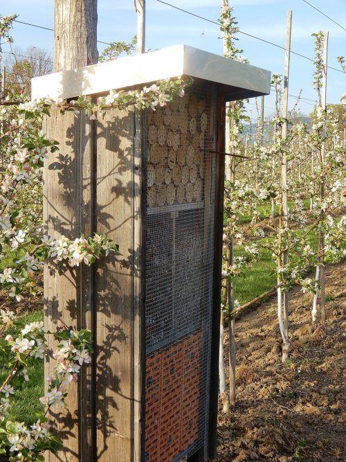 Ein Insektenhotel lockt unter anderem viele Wildbienen.