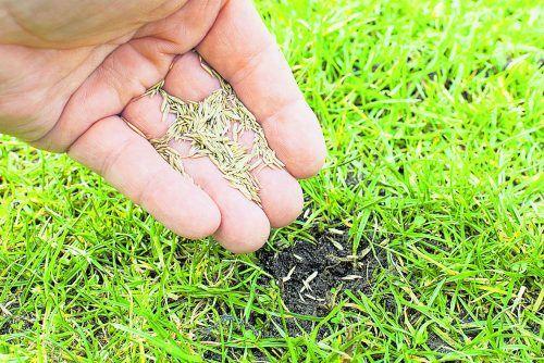 Empfehlung: Kahle Stellen mit Rasensamen behandeln und täglich wässern. ISTOCK