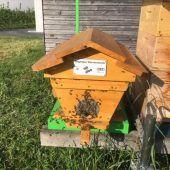 Ein digitaler Bienenstock am BSBZ