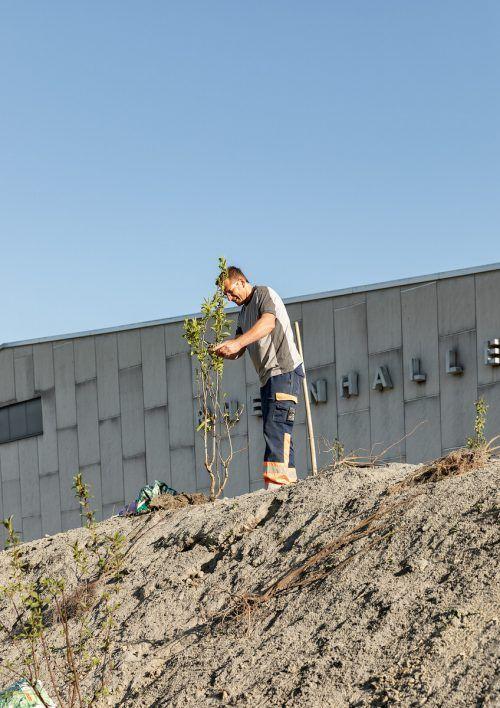 Der neue Bienenhügel neben der Rheinhalle wird bepflanzt. Gemeinde