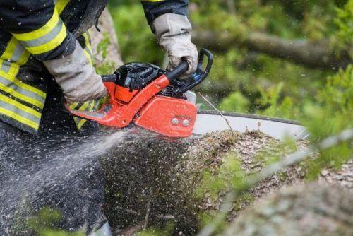 Holzarbeiter erlitt bei Unfall im Wald schwere Verletzungen. nolte