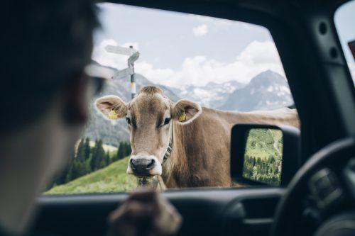 Inmitten der imposanten Bergwelt von Lech Zürs können Kinofans im Sommer Filme unter freiem Himmel schauen. ZangerL