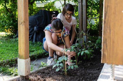 Manche jungen Leute entdeckten ihre Liebe zur Gärtnerei.sos Kinderdorf vorarlberg