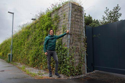 Unternehmer Stefan Gieselbrecht vor der begrünten Lärmschutzwand.Bis die Wand völlig grün ist, dauert es rund drei Jahre. vn/Paulitsch