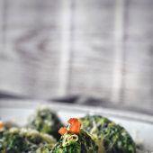 """<p class=""""caption"""">Aus dem Alma Kräuterschatz lassen sich wunderbare Spinat-Käse-Nocken machen. Am besten schmecken sie in Salbeibutter geschwenkt.Alma/Rupp AG</p>"""