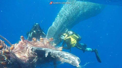 "Das Fischernetz wurde als ""illegales Fanggerät"" beschlagnahmt. Reuters"