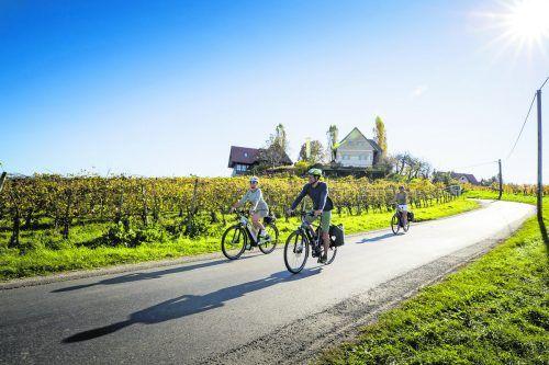 Die Radtour Weinland Steiermark erstreckt sich über acht Etappen und führt durch Weinberge, Dörfer und Apfelgärten.Steiermark Tourismus /Tom Lamm (3)