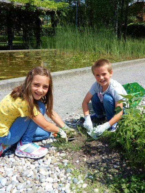 Die Volksschüler hatten Spaß am Gärtnern in der Sonne.