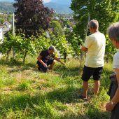 <p>Laubarbeiten, Bodenpflege und Pflanzenschutz standen im Mittelpunkt. </p>